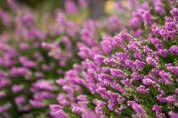 Ogrodnictwo Niemcy praca od zaraz przy kwiatach bez języka dla par Ahrensburg