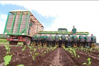 Od kwietnia 2020 sezonowa praca w Niemczech przy sadzeniu warzyw bez języka rolnictwo Cappeln