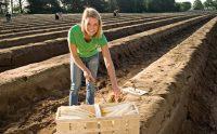 Zbiory szparagów oferta sezonowej pracy w Niemczech bez znajomości języka od kwietnia Bielefeld 2020