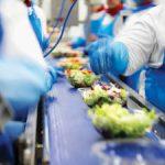 Produkcja sałatek owocowych i warzywnych praca Niemcy bez języka w Schwalmtal 2020