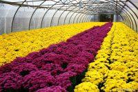 Bez języka przy kwiatach sezonowa praca Niemcy ogrodnictwo od zaraz 2020 Stuttgart