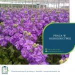 Anglia praca w ogrodnictwie przy kwiatach od zaraz w Hull UK