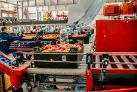Holandia praca fizyczna od zaraz przy sortowaniu owoców i warzyw 2021