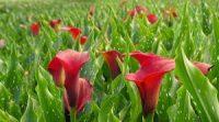 Ogrodnictwo przy kwiatach bez języka dam pracę w Holandii od kwietnia 2021 Almere