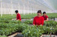 Hiszpania praca sezonowa w ogrodnictwie – sadzenie i krzyżowanie roślin, Almeria