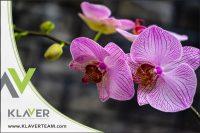 Ogrodnictwo dam pracę w Holandii przy kwiatach-storczykach od zaraz, Haga