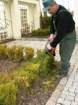 Od zaraz Niemcy praca w ogrodnictwie przy pieleniu bez znajomości języka