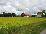 Dam fizyczną pracę w Szwecji na farmie bez znajomości języka Vaxjo