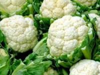 Holandia praca przy zbiorach warzyw bez znajomości języka Obdam