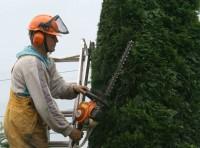 Niemcy praca sezonowa bez znajomości języka w ogrodnictwie Kolonia