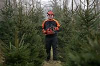 Oferta pracy w Norwegii w leśnictwie przy choinkach bez języka od zaraz Mandal