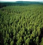 Szwecja praca w leśnictwie przy czyszczeniu lasu bez znajomości języka 2015