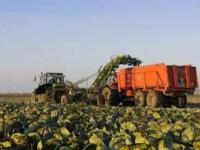 Praca Niemcy w Zwickau przy zbiorach warzyw bez znajomości języka