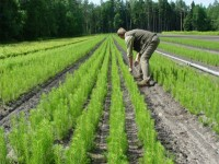 Bez znajomości języka Anglia praca od zaraz w rolnictwie przy drzewkach Crewe
