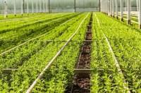 Praca w Danii ogrodnictwo dla kobiet od zaraz bez znajomości języka Århus
