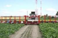 Anglia praca sezonowa bez znajomości języka od zaraz przy zbiorach warzyw Lincolnshire