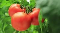 Od zaraz sezonowa praca Niemcy zbiory warzyw w szklarni bez języka Oranienburg