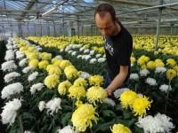 Niemcy praca w ogrodnictwie od zaraz przy kwiatach bez języka Frankfurt nad Odrą