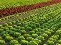 Dam sezonową pracę w Anglii bez języka zbiory warzyw i owoców Hereford sierpień-wrzesień 2016