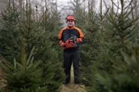 Dam pracę w Danii od zaraz w leśnictwie bez języka Viborg szkółka leśna