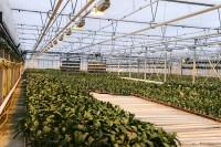 Od zaraz dam pracę w Holandii ogrodnictwo bez znajomości języka Haga