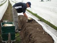 Praca w Niemczech sezonowa 2017 przy zbiorach szparagów bez języka Neuwarendorf