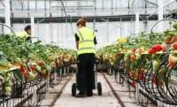 Ogłoszenie pracy w Holandii bez znajomości języka zbiory owoców Venlo