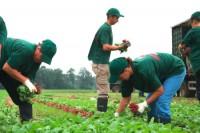 Praca Niemcy przy zbiorach warzyw 2017 bez znajomości języka Dortmund