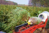 Sezonowa praca Dania w leśnictwie bez języka przy choinkach od zaraz 2020